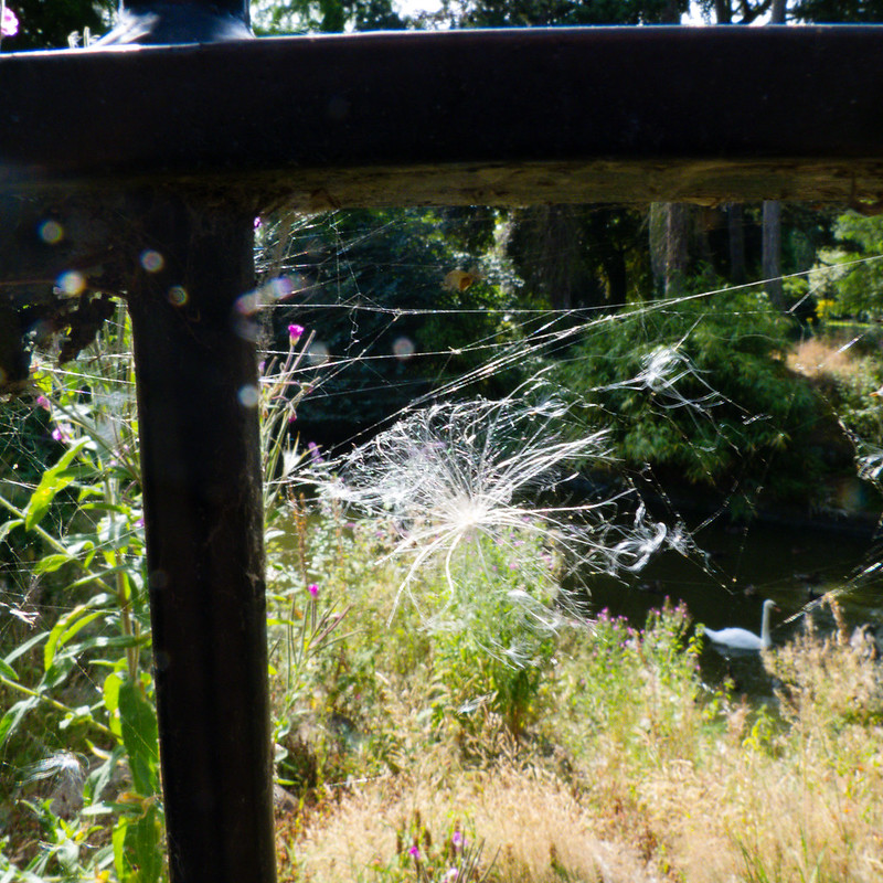Thistledown trapped