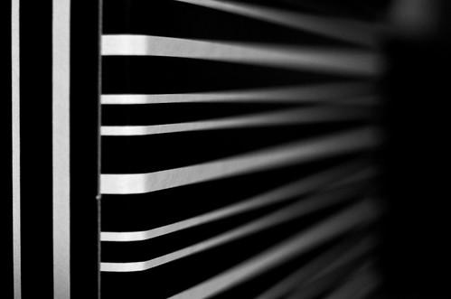 Day #039 - Zebra