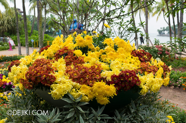 Sentosa Flowers 2013 - Chrysanthemum