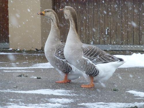 Un dimanche sous la neige