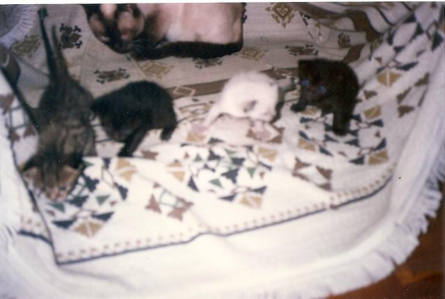 gatiños