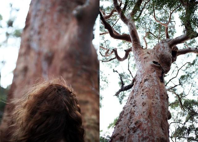 nikki_euc trees