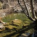 Small photo of Creek in the Arroyo Hondo