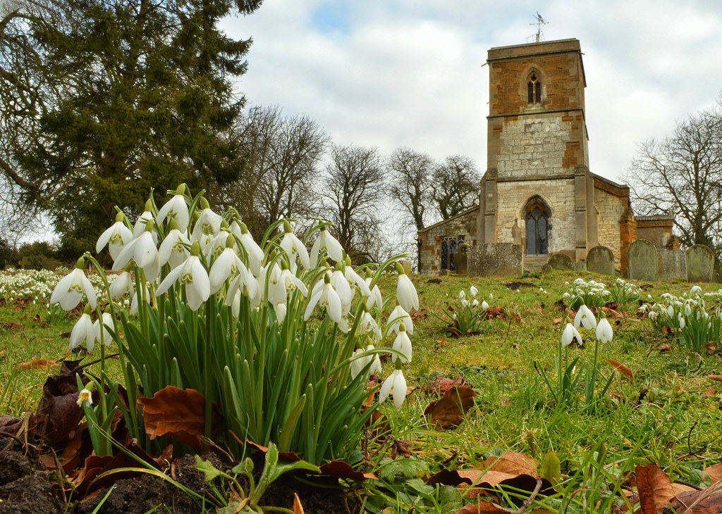 billy clapham utterby snowdrop photography