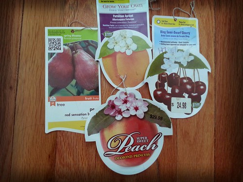 2013.02_fruit tree tags