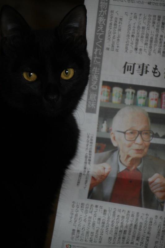 ムツゴロウさんと黒猫