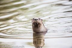 Otterz in the Waterz