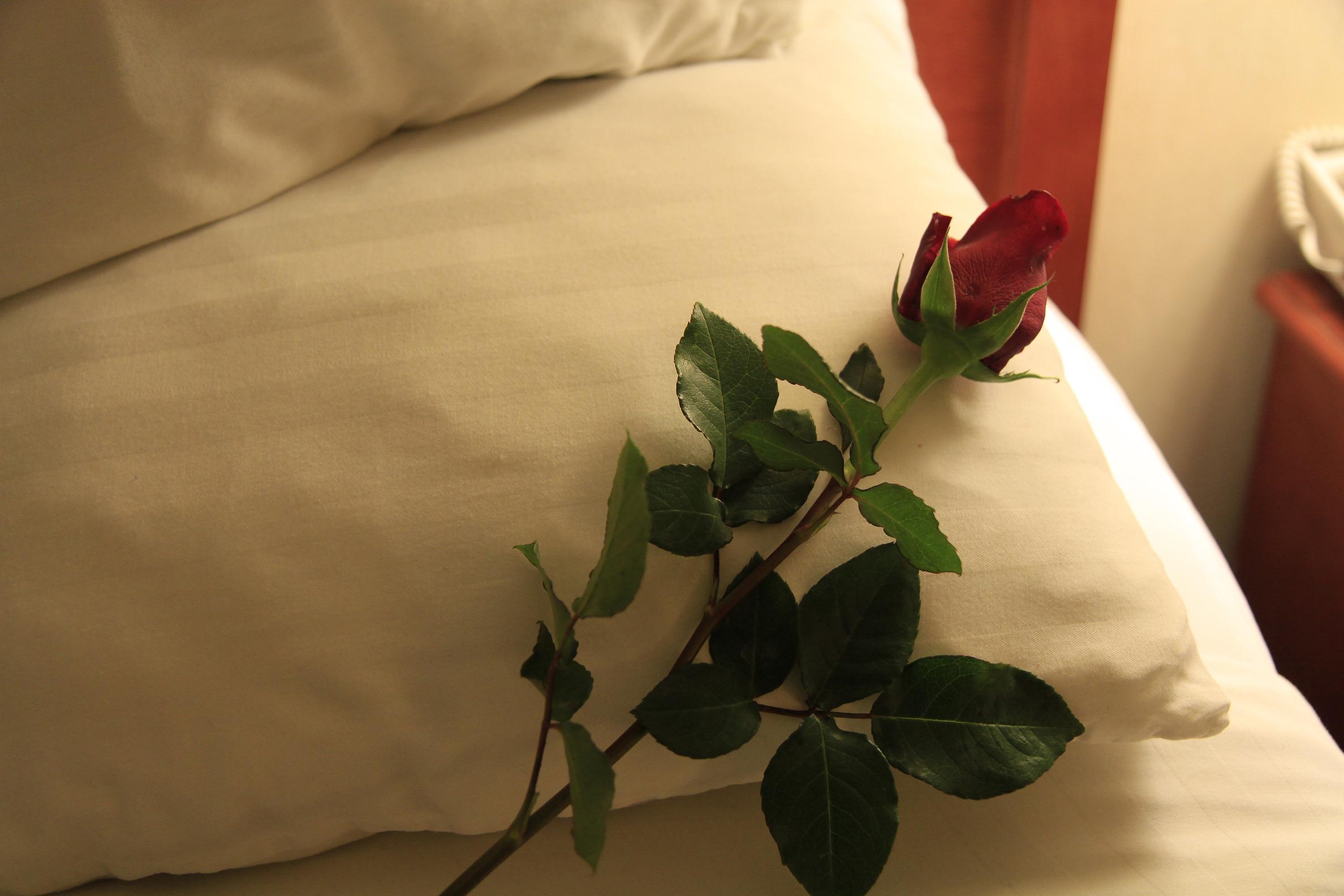 valentine rose2