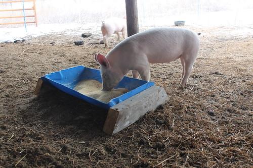 Cheap Pig Equipment Green Machine Farm