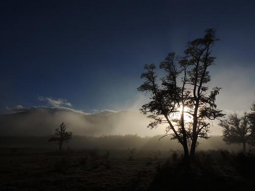 chile night amanecer árbol andes chilecentral regióndelaaraucanía ñirre nothofagusantartica pwpartlycloudy