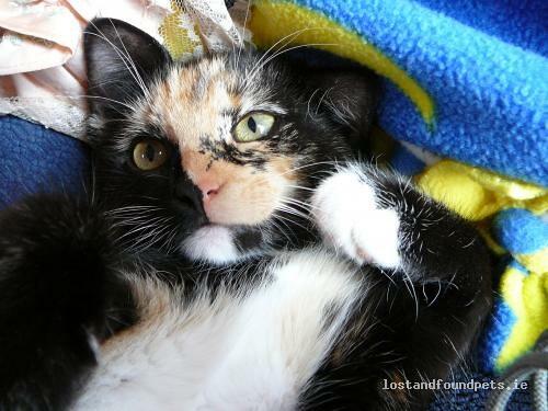 [Updated] Fri, Feb 22nd, 2013 Lost Female Cat - Carrowkilla, Ballynacally. , Clare