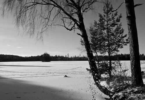 lake trees shadows black white bw blackandwhite sweden swedish landscape nature frozen water ice fritsla furusjön sjuhärad marks kommun sky sunlight clouds forest
