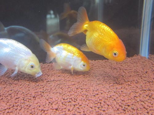 Aquarium Mar. 9, 2013 (3)