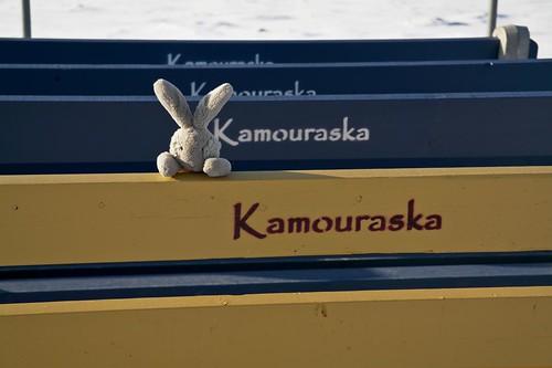 Travel Bunny in Kamouraska  - #LexGoFurther - A Ford Escape