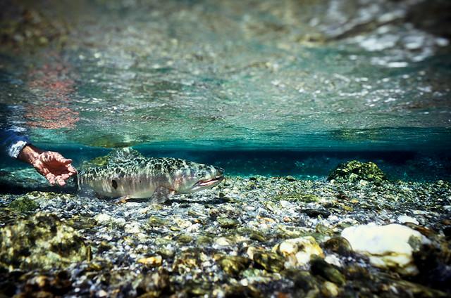 underwater release cedarlodge.net