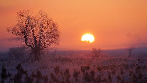 tree fog sunrise landscape fotocompetition fotocompetitionbronze