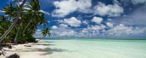 work pano palmtrees cocos resolute