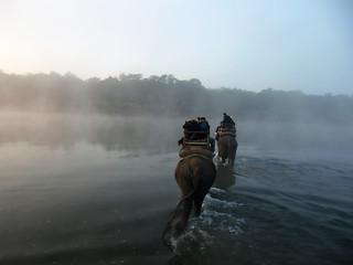 Elefantes en Nepal.
