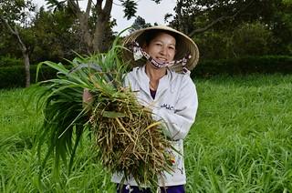 NP Vietnam forages 23