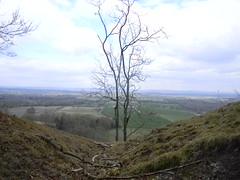 Tree in a gap