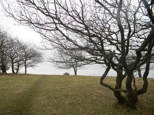 Wizened trees