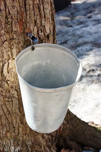 canadian-maple-syrup-sugarbush