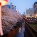 Nakameguro 中目黒 Cherry Blossoms さくら, Tokyo 東京 Japan by Driftclub
