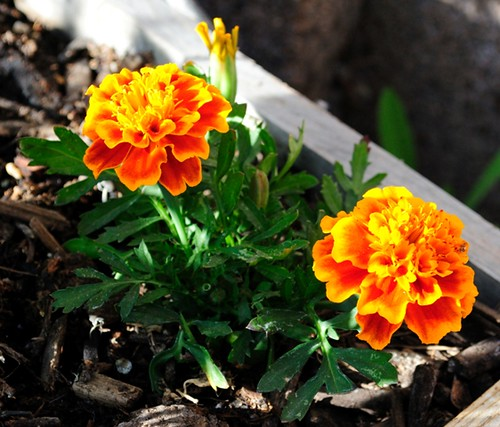 Carols Garden_04.06.13_01