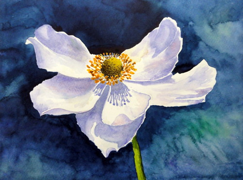 White flower Japanese anemone, by Ione