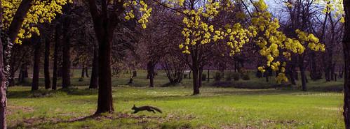park city trees nature spring squirrel running macedonia skopje