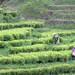 jardin de Jingning bai