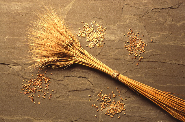 wheat color class