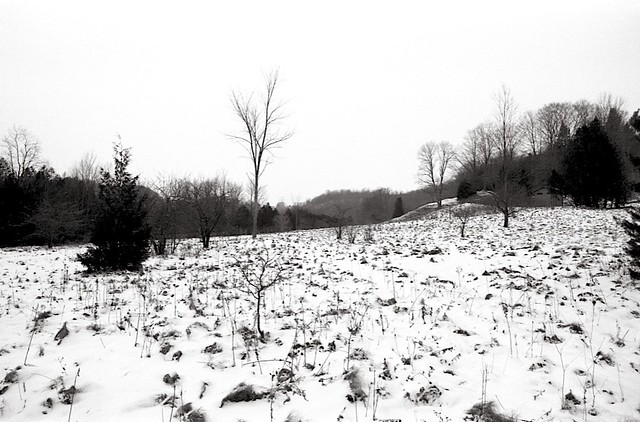 The Meadow in Winter