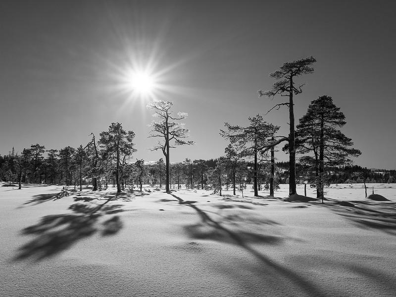 Langåskjølen nature reserve