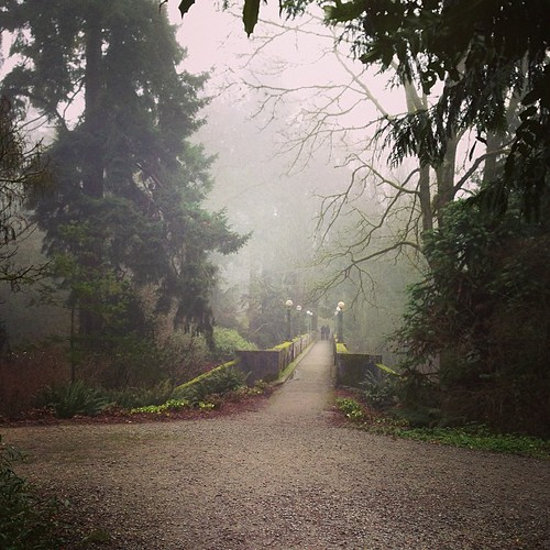 Foggy 7 miler through the Arboretum