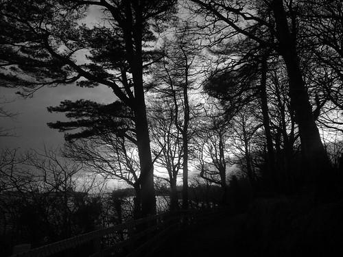 trees light sunset nature monochrome silhouette fence blackwhite twilight dusk path branches n8 donegaltown thebankwalk