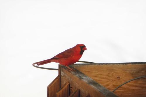 birds-