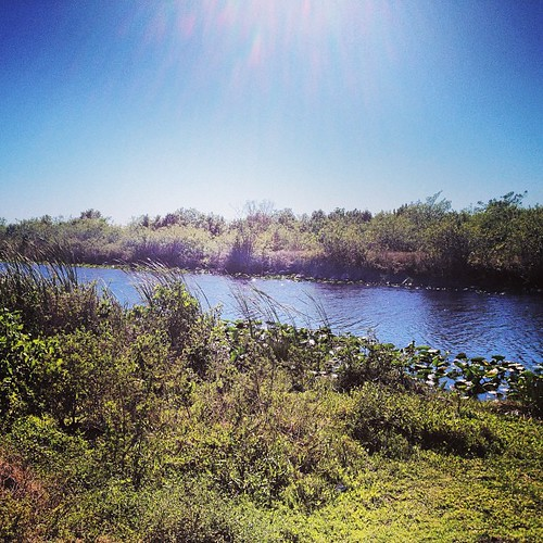 Zachary requested this shot :) #florida #everglades #igersftl