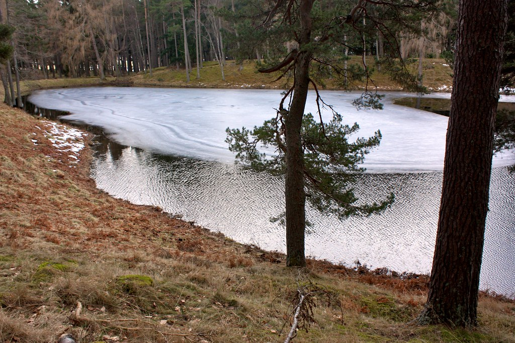 Lochan on Invercauld Estate