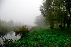 Southern Buh in Fog