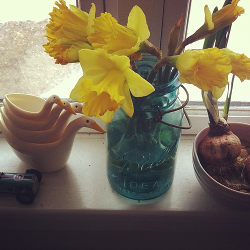 vintage duck measuring cups/daffodils/paper whites thinking spring on the winter windowsill