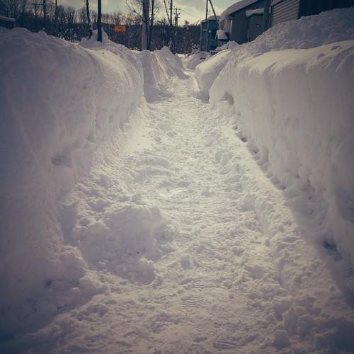 雪で埋まりそうな歩道