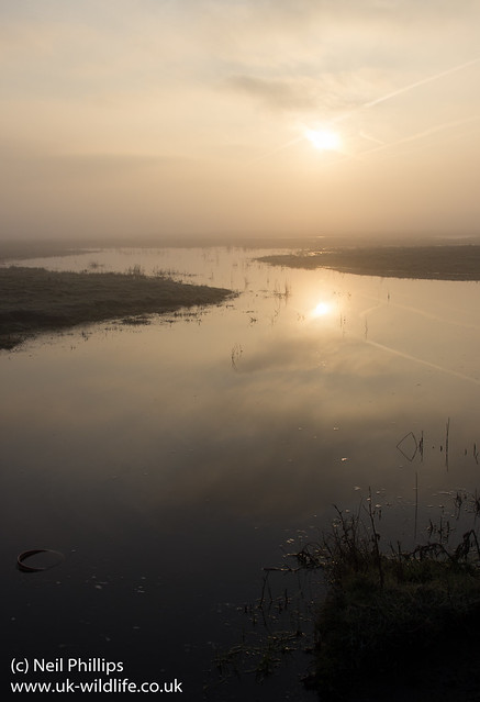 misty Elmley sunrise
