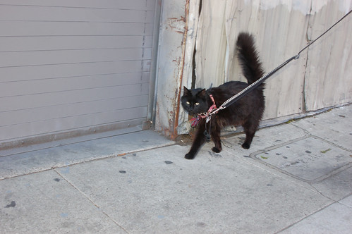 cat on leash.jpg