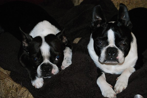 Heidi and Bruno laying on a blanket.