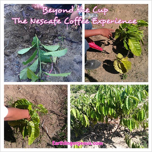 Beyond the Cup: The Nestle Coffee Experience