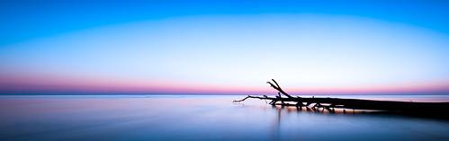 longexposure morning sky tree water beautiful silhouette sunrise bay peace peaceful calm chesapeake