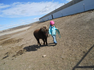 Horse Lessons 15Mar13- Catching Meggie