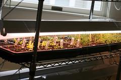 seedlings 034