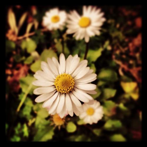 #flower#spring#beautiful#alone
